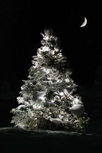 Tree+117523